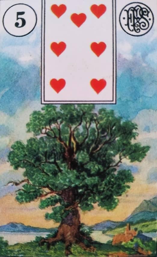 drzewo lenormand
